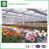 Serre chaude en verre vie commerciale de Multi-Envergure de longue pour des fleurs
