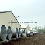 Casa clara da agricultura da construção de aço para o moinho de alimentação/fazenda de criação /Coldroom