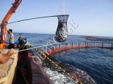 深いSAEのよごれ止めの漁網のケージを耕作する文化