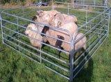 panneaux de frontière de sécurité de la ferme d'animaux en métal 12foot/panneaux corral de bétail (usine)