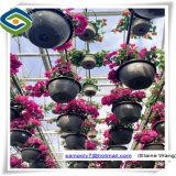 Estufa hortícola de vidro para o crescimento de Rosa