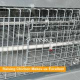 Автоматическая система клетки оборудования цыпленка для курочки с поясом позема