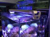 Iluminación ajustable del acuario del LED para el tanque del filón de los pescados