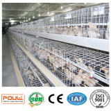 A galinha prende o equipamento de sistema ou o equipamento da exploração avícola