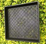 プラスチック養樹園の鍋の注入プラスチック型の習慣のサイズ
