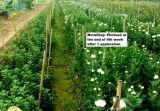 식물 보호 식물 성장 규칙 Moreking (A88)