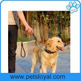 يزركش محبوب ثانويّة رصاص كلب جرو رباط ([هب-101])