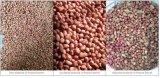 Máquina de classificação do classificador da cor de alimento do classificador da cor da semente do amendoim