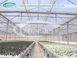 Span multi Film Greenhouse pour Vegetables