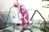 Flor artificial de la orquídea de la alta calidad con la capa de la sensación de la mano (SW18901)
