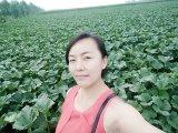 ヨーロッパへの2015の新しい穀物の黒のカボチャシード