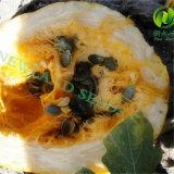 Sementes de abóbora novas AA de Gws da colheita com qualidade superior para a venda