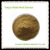 [هيغقوليتي] صاف طبيعيّة طوكيو بنفسجيّة عشب مقتطف