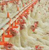 Équipement automatique de ferme avicole pour la Chambre de poulet