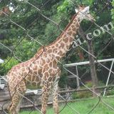 Rete fissa del giardino zoologico