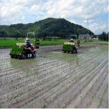 De Plantmachine van de rijst (2ZB6300)