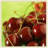 Goedkope Ingeblikte Voedsel Ingeblikte Fruit Ingeblikte Kersen