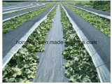 Estera plástica de tierra tejida agrícola ULTRAVIOLETA anti de la cubierta del control de Weed de la tela de los PP