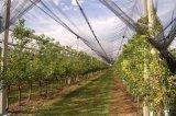 7X2.8mmの50G/M2農業のりんごの木の反あられのネットの網