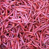 Peperoncini rossi del Yunnan Arbol senza gambo