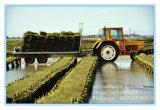 Aquakultur-Ineinander greifen/Austeren-Ineinander greifen/Austeren-Beutel-Fabrik