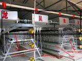 4 Reihen 120birds ein Rahmen des Schicht-Rahmen-Systems