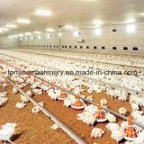 Matériel d'alimentation de la volaille de qualité