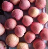중국 빨간 Apple를 포장하는 새로운 작물 판지