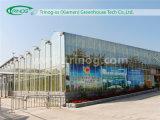Estufa de vidro comercial de Venlo para flores
