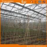 Type étendu serre chaude de Venlo d'utilisation couverte par Glass
