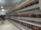 Il pollame prefabbricato alloggia l'azienda agricola di pollo della tettoia