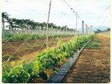 Export zum Argentinien-Markt-Pflanzenstütznetz