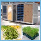 Sprout de feijão que faz a máquina/soja agrião Growing da máquina que faz a máquina