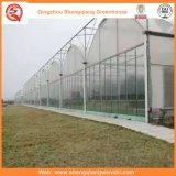 야채 또는 정원 또는 꽃 또는 농장 플라스틱 온실