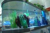 De acryl Tank van Vissen (M.-004)