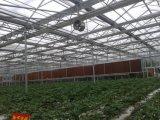 식물성 성장하고 있는을%s 폴리탄산염 장 온실