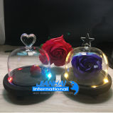 Vaso di vetro chiaro del Cloche della Bell della lampada con il disegno della parte superiore di bellezza