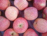 Сладостный и хрустящий красный FUJI Apple