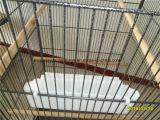 Grands Birdcages extérieurs de cages d'oiseau de vol de volière d'oiseau