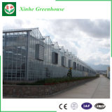 Serre van het Glas van de multi-spanwijdte de Commerciële voor het Groeien van Groenten