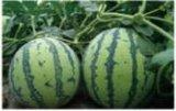 Elementos da grande quantidade da alta qualidade da água - agente seletivo solúvel do ácido Humic do fertilizante