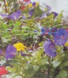 Emissores ajustáveis do gotejamento da irrigação do estilo do raio (HT6353A)