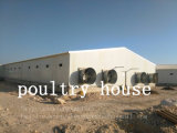 Apparatuur de van uitstekende kwaliteit van het Landbouwbedrijf van de Kip van het Huis van het Gevogelte van het Staal van China