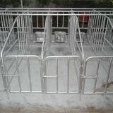 Il TUFFO poco costoso di Phot di prezzi ha galvanizzato la stalla Endurable di gestazione delle gabbie del maiale