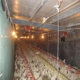 [أوتمتيك] مولّد دجاجة يغذّي تجهيز لأنّ [بوولتري فرم] منزل