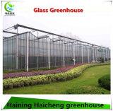 花およびプラントのための商業ガラスHydroponic温室