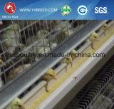 自動亜鉛めっきの肉焼き器鶏のケージ(Hのタイプ)
