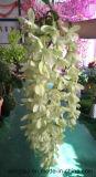 Glicine di seta di plastica di nuovo disegno che Wedding fiore artificiale