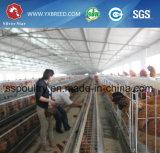 Тип оборудование h дома цыпленка цыплятины клетки для слоя или бройлера