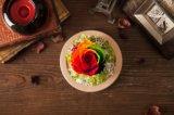 Flor verdadera natural del 100% hecha a mano para el regalo de cumpleaños del día de tarjeta del día de San Valentín de la decoración del día de fiesta